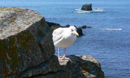 Naviguer pour pas cher en Bretagne avec le cobaturage